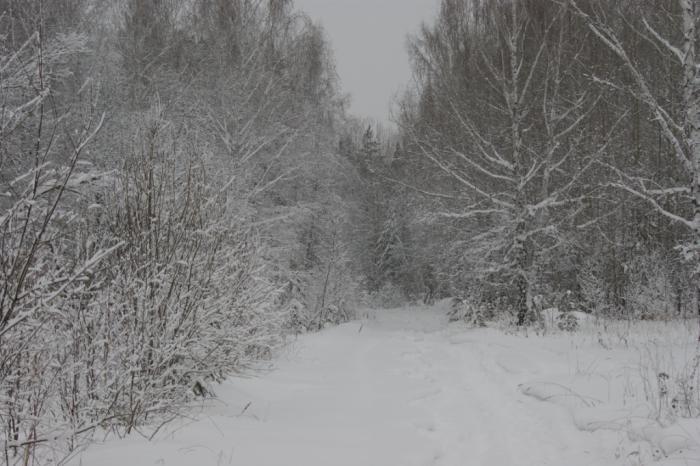 Зимняя дорожка
