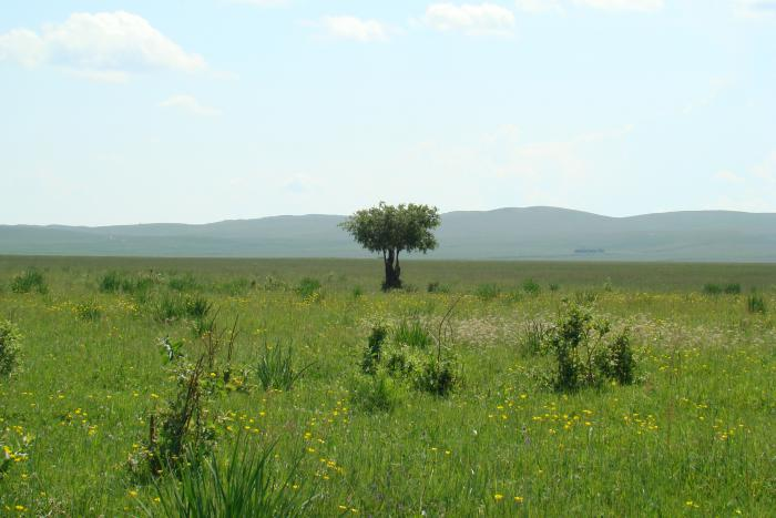 дерево посреди поля