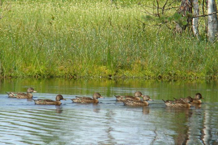 ребятки плавают