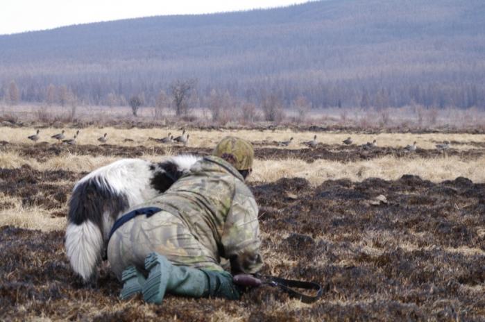 Оригинальный способ подкрадывания гусей. Распространен в центральной Якутии.