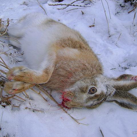 фото с охоты 2010год