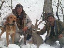 Горная охота в Азербайджане с Русским гончком.
