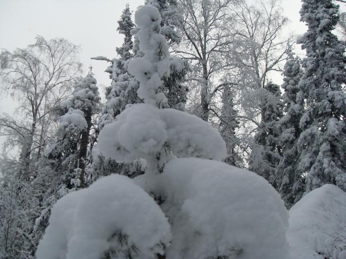 За что мы любим нашу зиму)