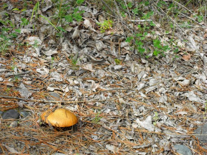 ходили за грибами)