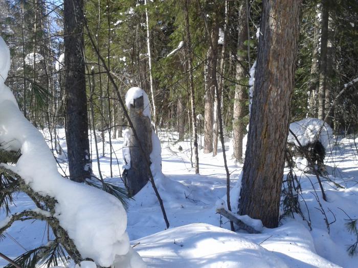 прогулка по лесу  5