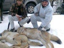 волки!!!!!!