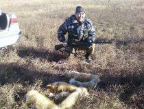Алтай,1 ноября 2012,отец с моими лисами))