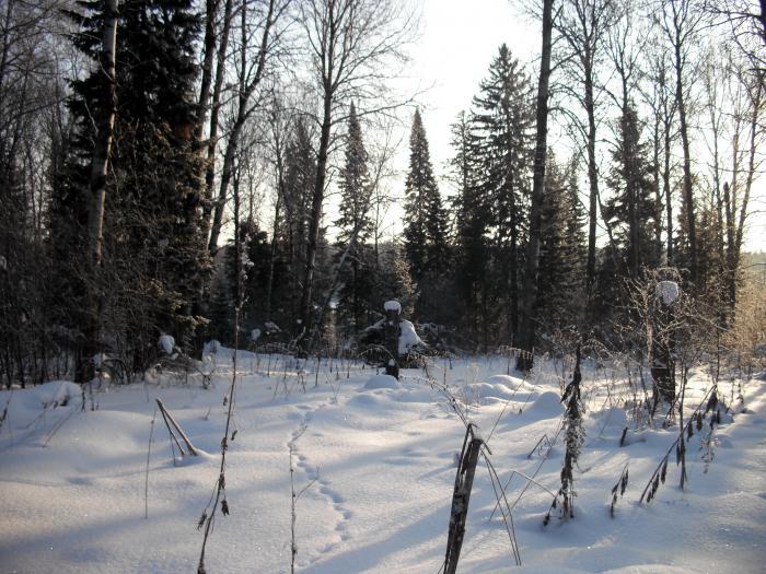Эпизод из жизни леса