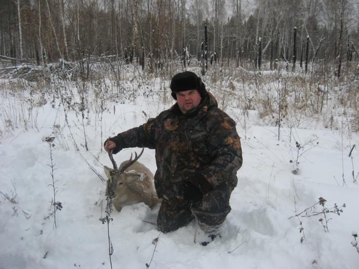 охота на косулю