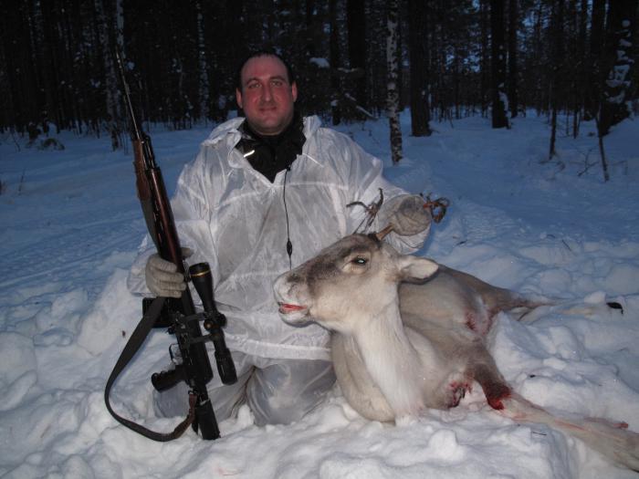 Северный олень .