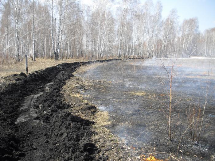 Вот так мы не даем огню проникнуть в лес. Ответ некоторым мудрецам!