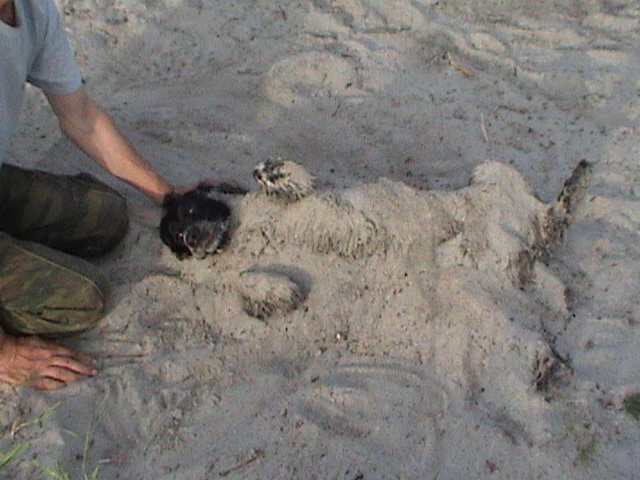 Песчаные ванны