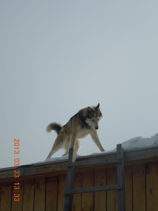 БУРАН который живёт на крыше!