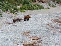 мама и медведи