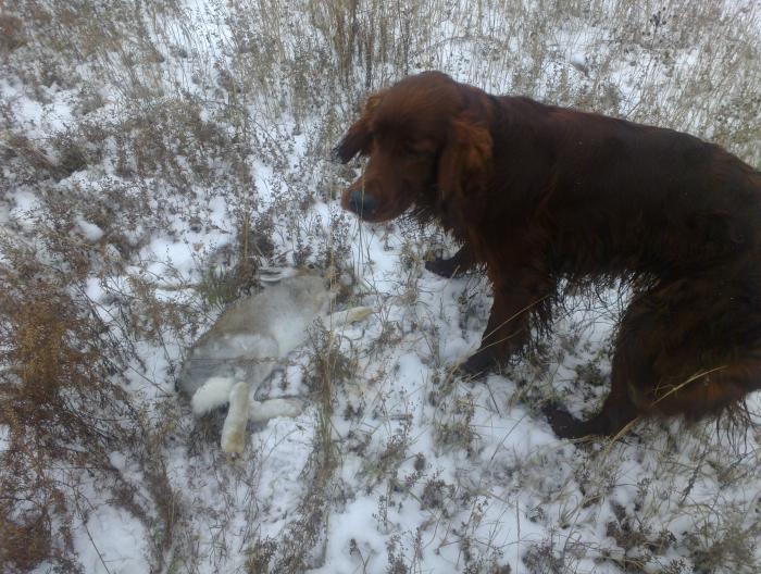 Первый заяц