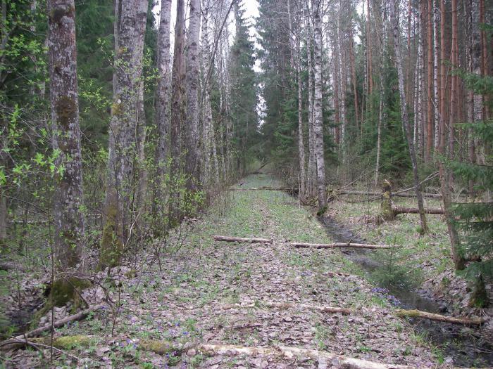 Просека по которой в старину охотился князь,длина по прямой 15 км.