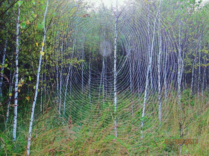 Лесные узоры.