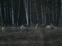 В сумерках у кромки леса