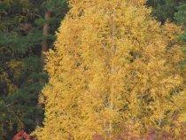 Осень, как ты красива.....