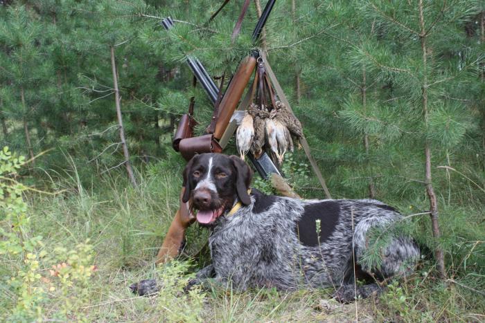ДАРКО  охота на перепела