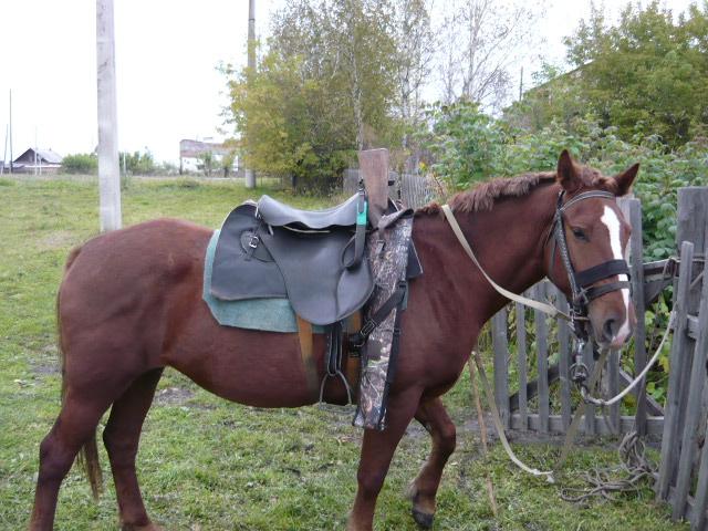 мой боевой конь!!!