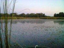 Кормовое болото.
