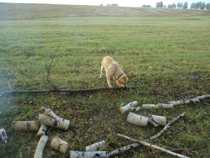 Тренировка перед охотой