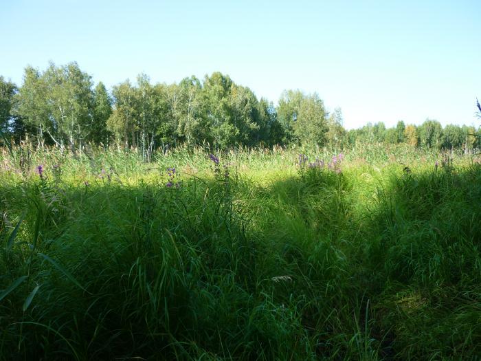 Во травищи ныньче нарасло...