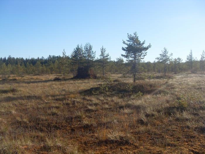 Карельские болота