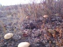 Грибочки у болотины....