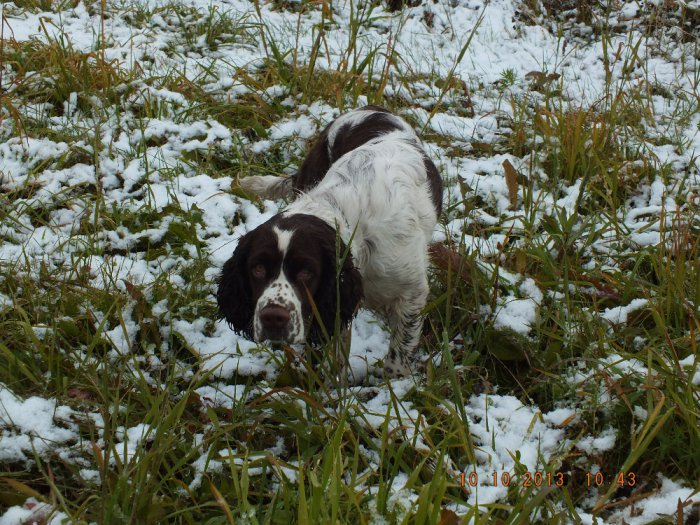 По первому снежку