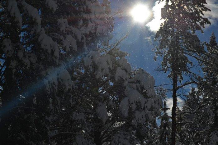 Первый снег в тайге.