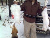 Охота с русской гончей