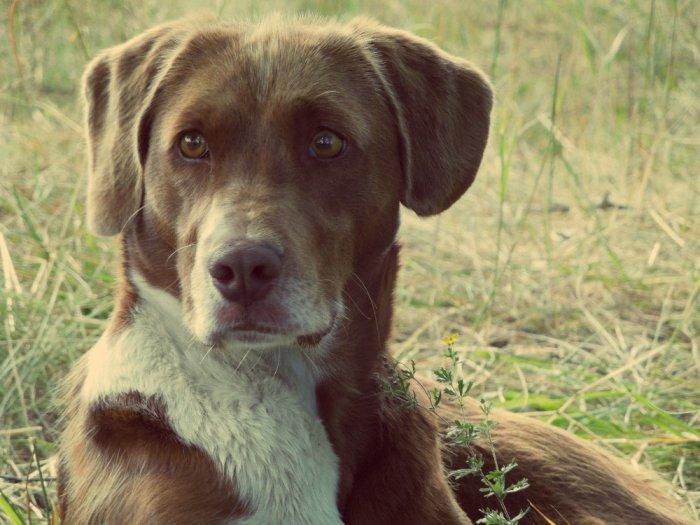Благородная собака (на вид!)