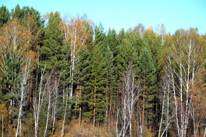 Осенний лес.