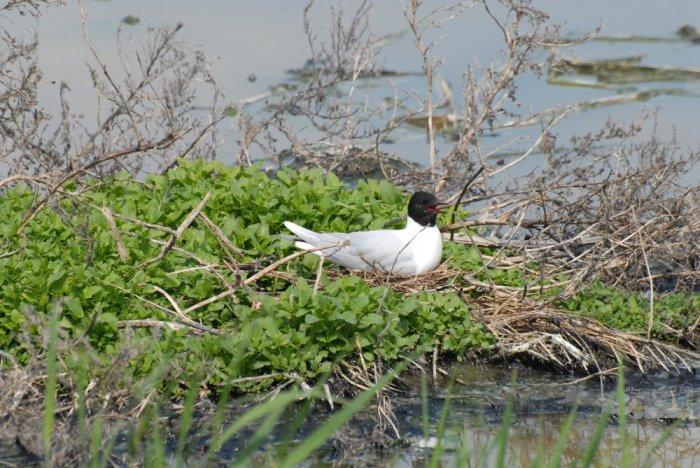 Одна из птиц совершающих дальние миграции.