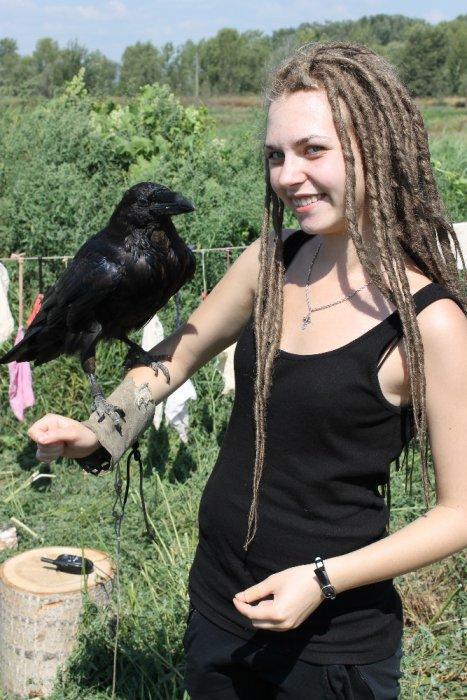 Ворон - один из крупнейших представителей отряда Воробьинообразные.