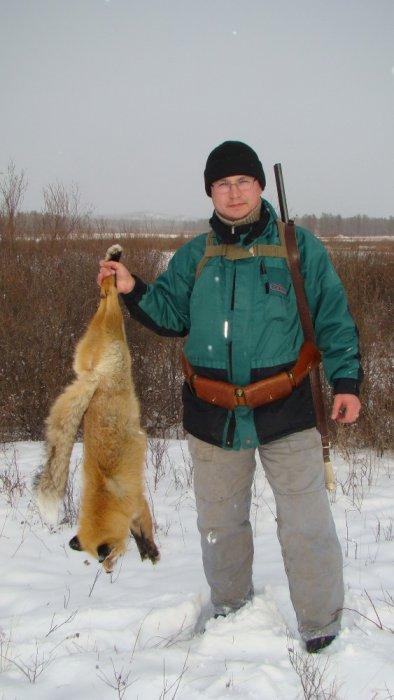 Самец, рыжой лисицы