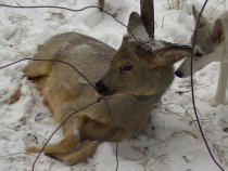 и снова браконьеры 1