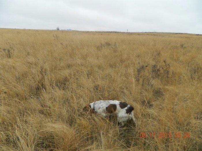 Ищем зайку в полях...