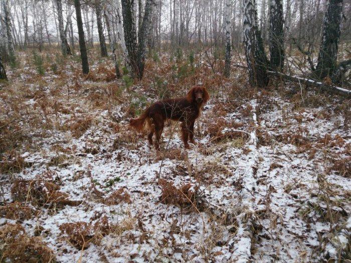 В осеннем лесу.