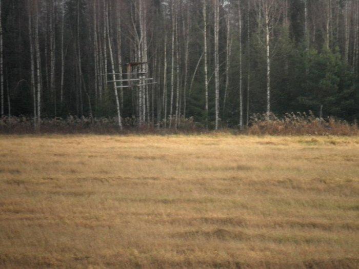 Кормовое поле вид с вышки.