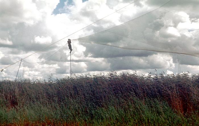 Над тростником