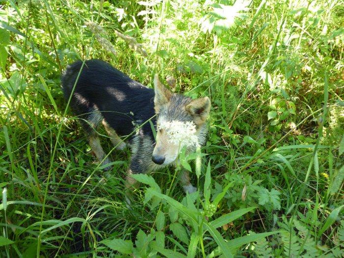 Жаль собачку - съели волки.
