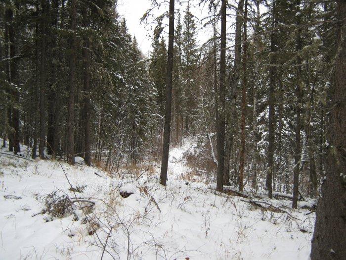 Начало зимы 2013 г.