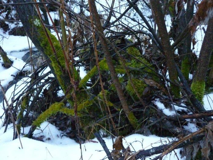 Зелень первого декабря, почти без снега и +3