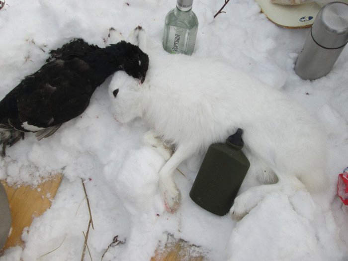 черное-белая добыча
