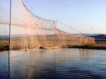 Ловушка для отлова птиц в Туве
