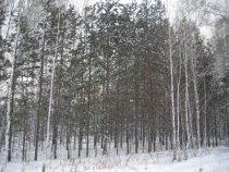 Рукотворный лес.