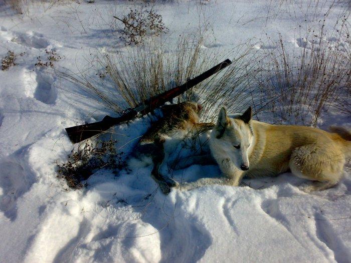 Закрытие охоты.